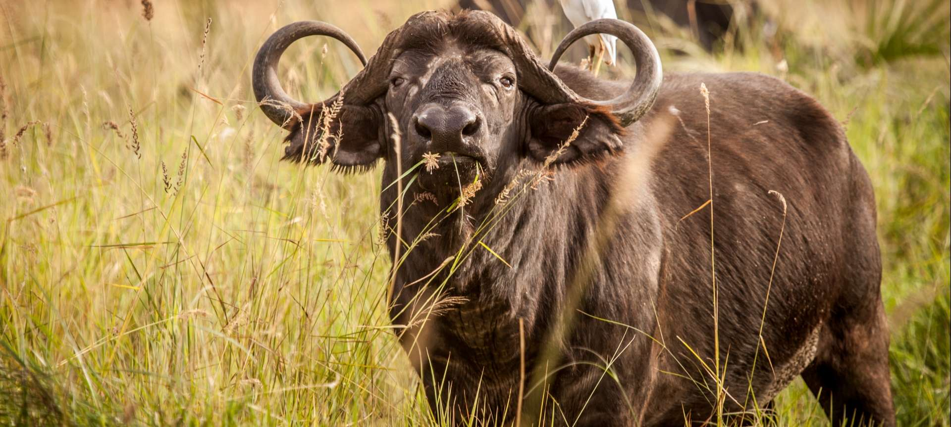 The South africa big 5 animals pictures